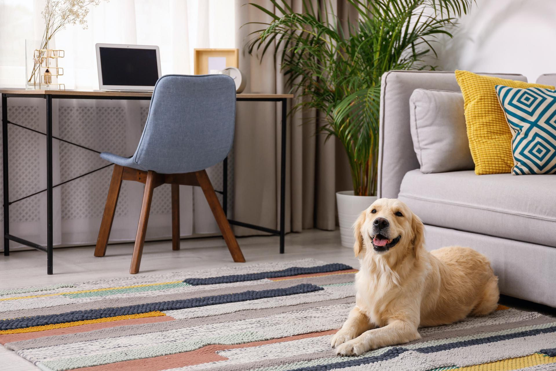 Homeowner Warranty Guide